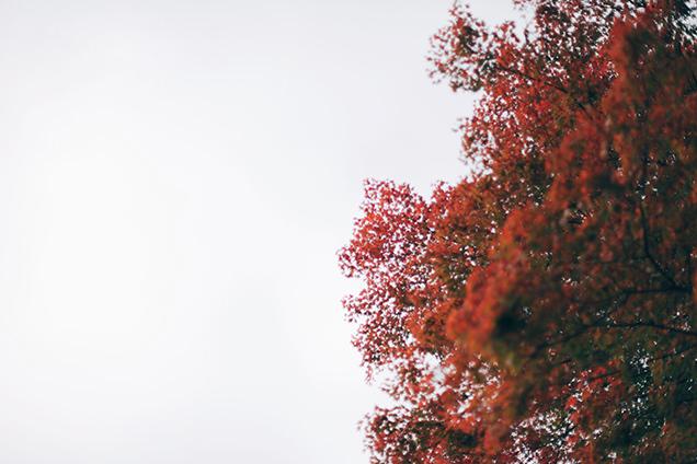 彫刻の森駅 紅葉