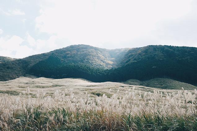 仙石原すすき