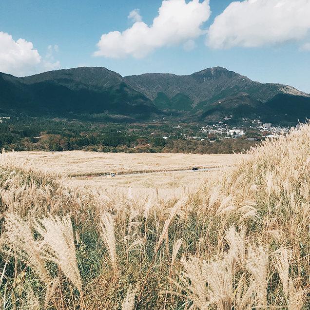 仙石原すすき スマホ 撮影 ポイント