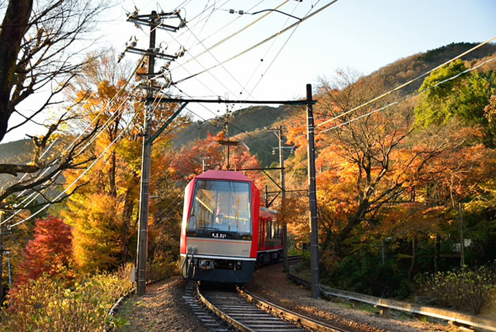 一面に広がるすすき草原に感動。秋めく箱根で絶景を撮る!