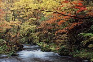 奥入瀬渓流の雲井の滝付近