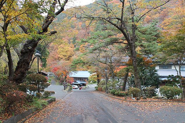 大沢温泉へ続く道