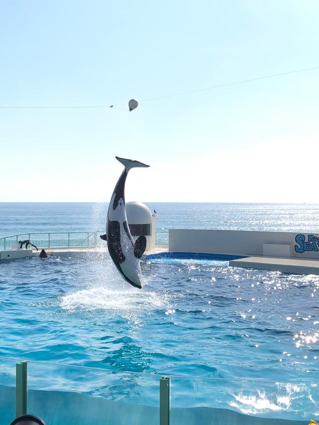 鴨川シーワールド イルカのパフォーマンス