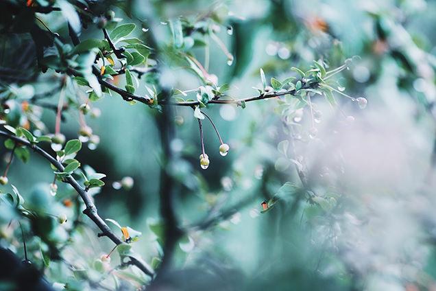 雨の降る小道で撮影した写真