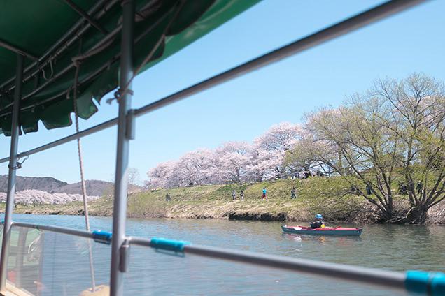 屋形船から見る白石川堤一目千本桜