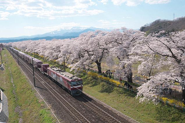 桜並木と列車と蔵王連峰