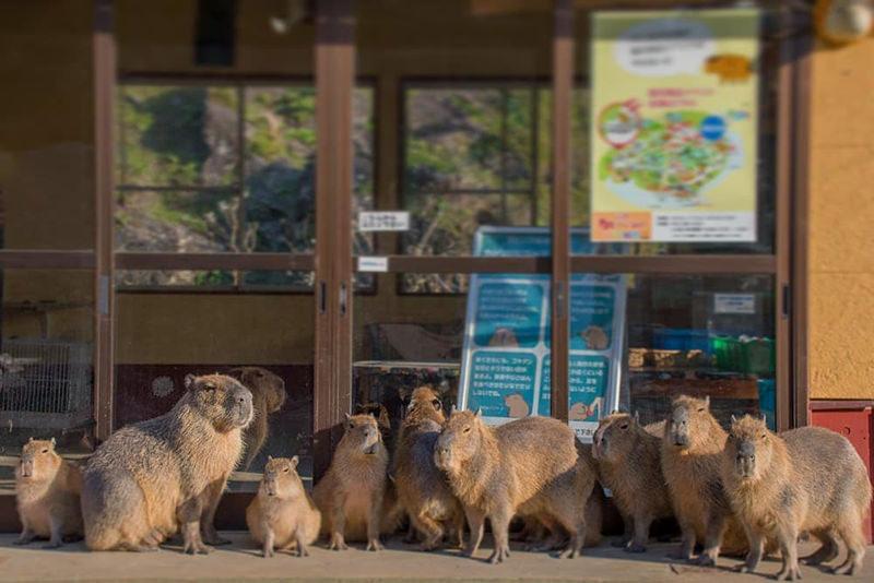 動物たちと触れ合える伊豆シャボテン動物公園のイメージ