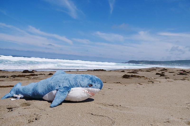 種差海岸とサメのぬいぐるみ