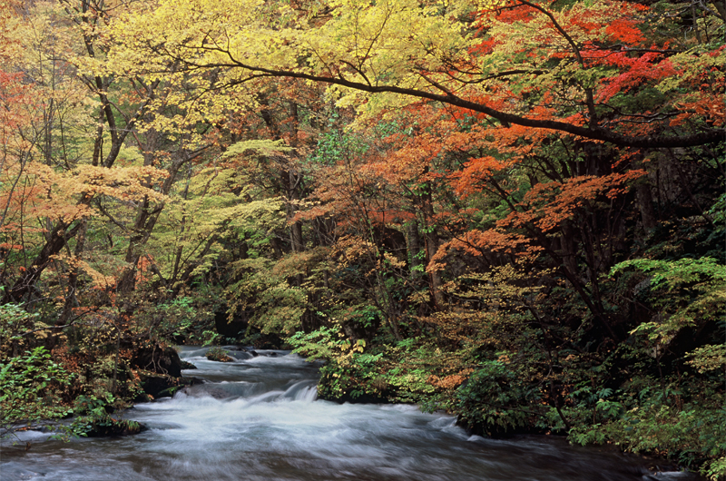 青森が好きすぎる東京人ねこぜが行く、奥入瀬渓流&十和田湖の紅葉旅