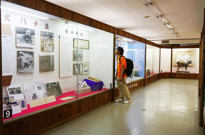 秋田犬博物室