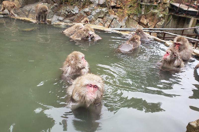 温泉に入るサル