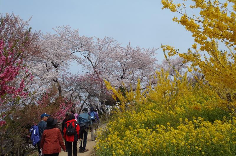 花見山公園の山道