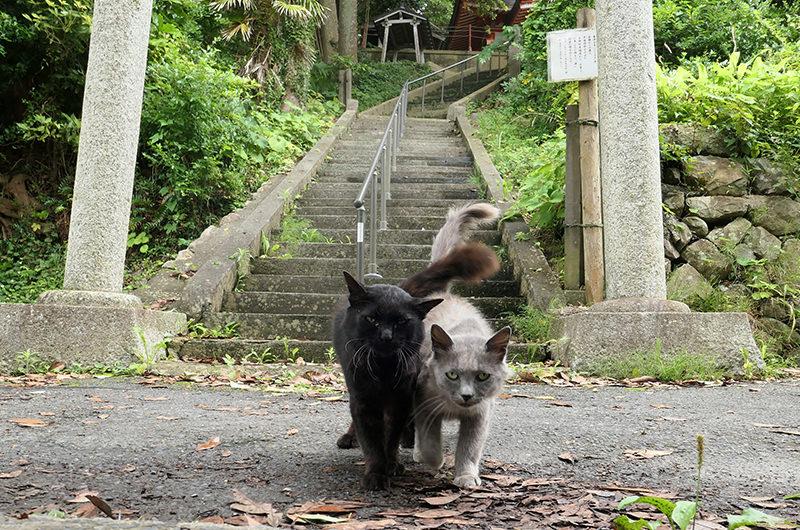 稲荷大明神にいた猫二匹