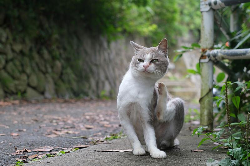 稲荷大明神にいた猫
