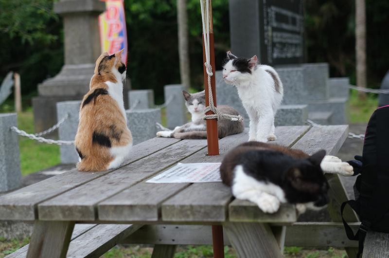 島のえきにいた猫