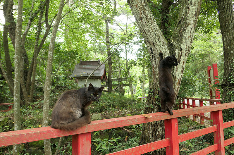 猫神社にいた猫二匹