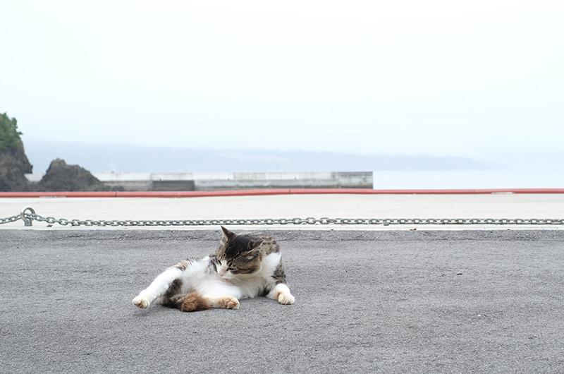 大泊港にいた猫