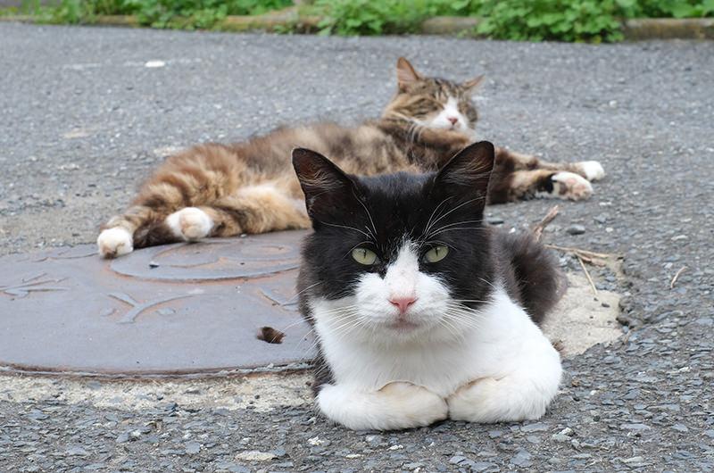 島の猫二匹