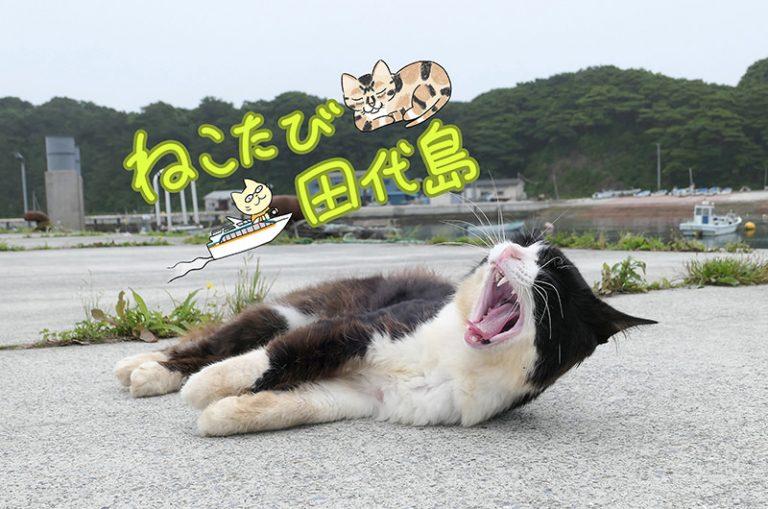 宮城県に猫だらけの島があった!?悶絶レベルの可愛い猫は必見!