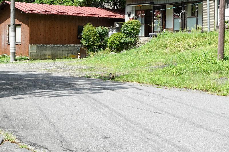 道中に遭遇した猫