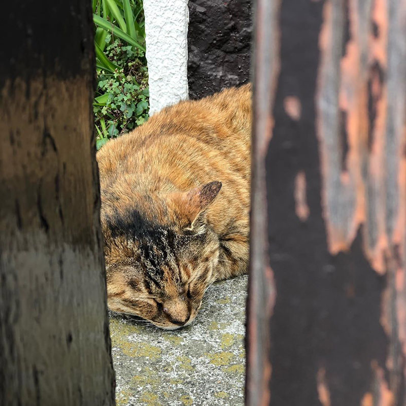 日暮里駅で見つけた猫