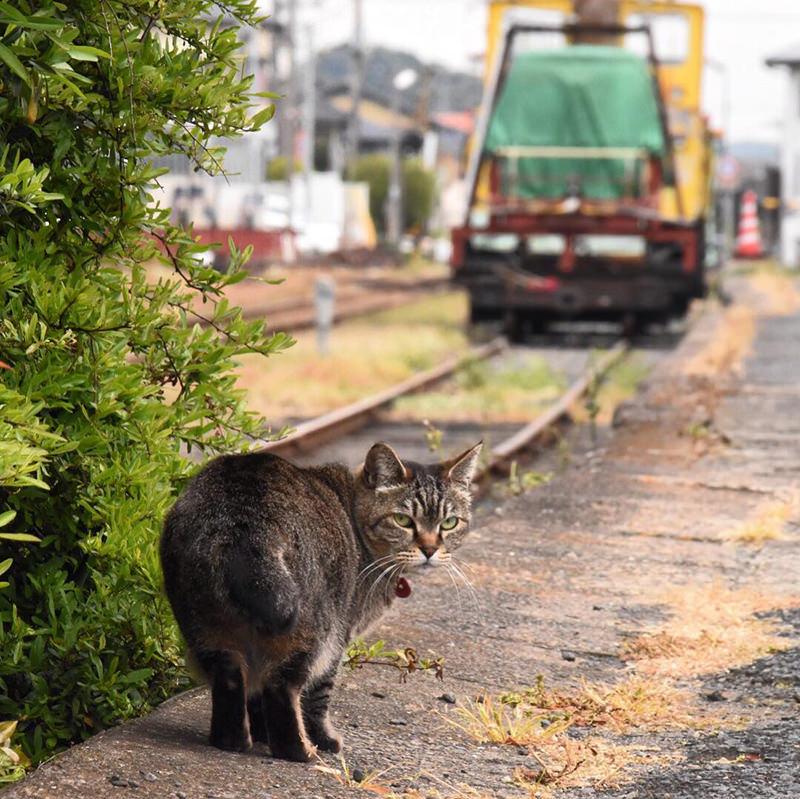 那珂湊駅にいる駅猫ミニさむちゃん