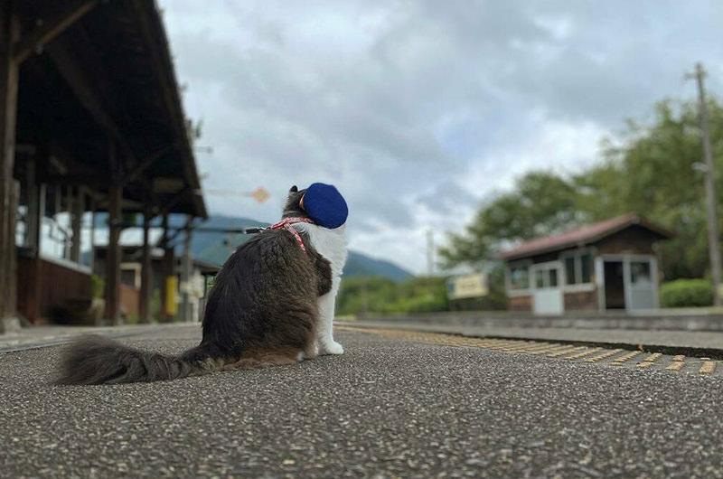 かわいすぎる!東日本の駅で出会える看板犬&看板猫5選