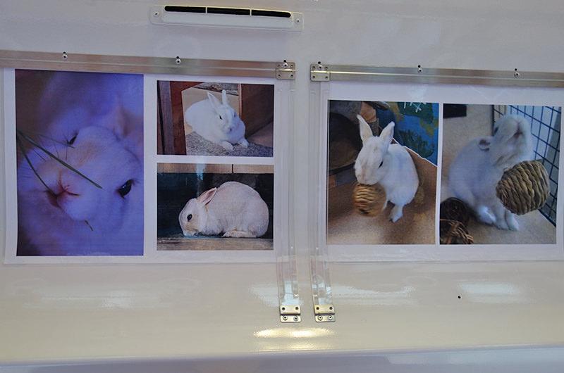 宮内駅 ウサギの駅長