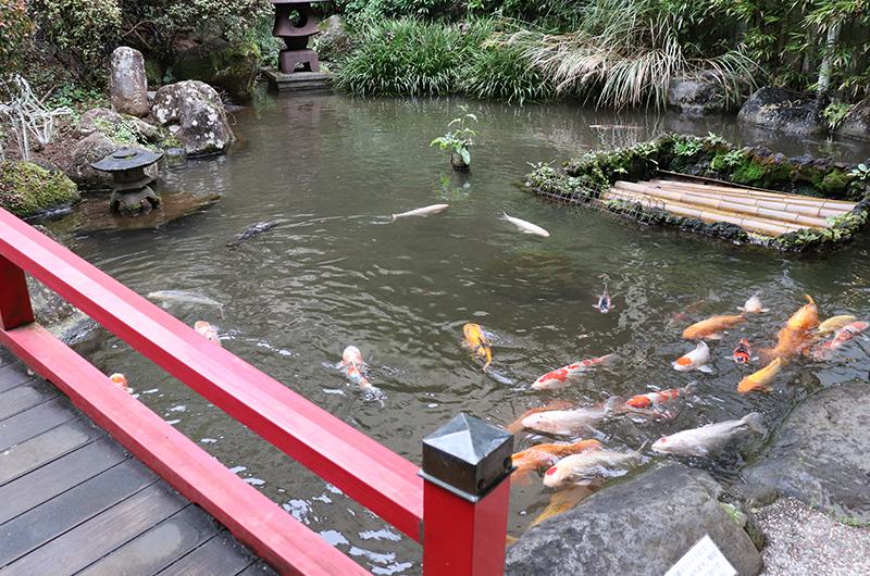 松風苑 庭園 池