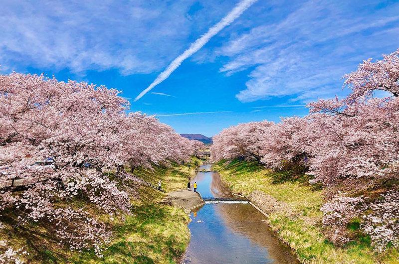 プロの写真家がインスタから厳選!美しすぎる桜の絶景写真