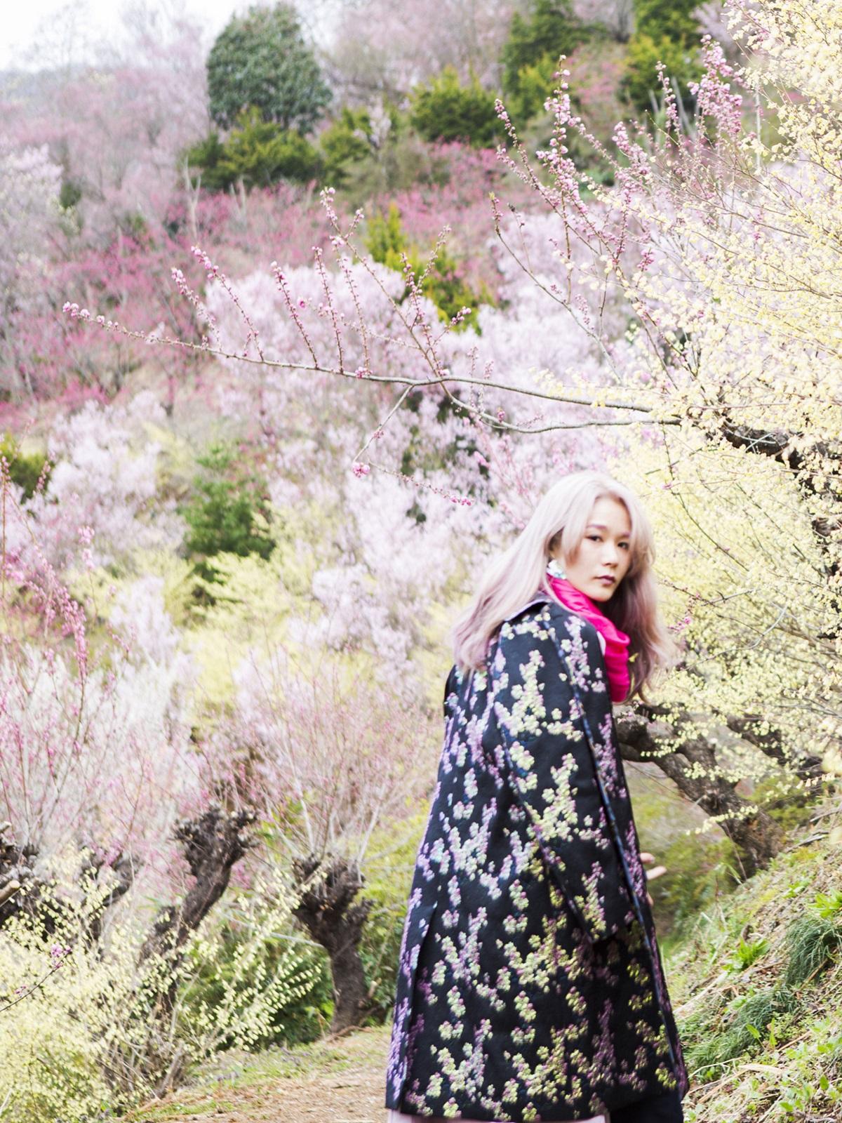 サムネイル画像_花見山公園