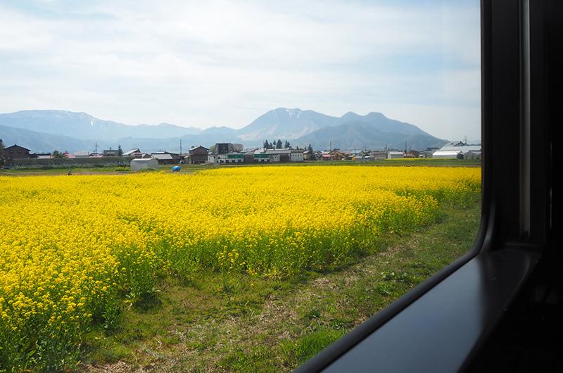 車窓 菜の花