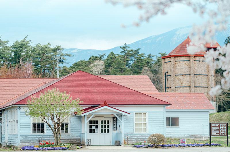【自然を満喫する】岩手・ひとり旅。網張温泉、小岩井農場の一本桜