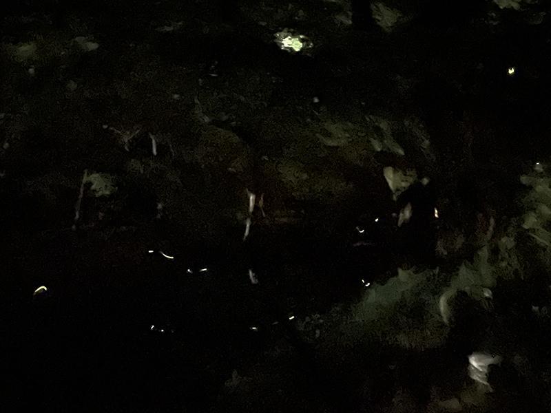 熱海梅園 蛍