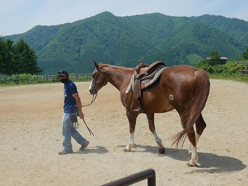 馬 トレーナー