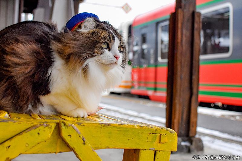 写真提供:芦ノ牧温泉駅