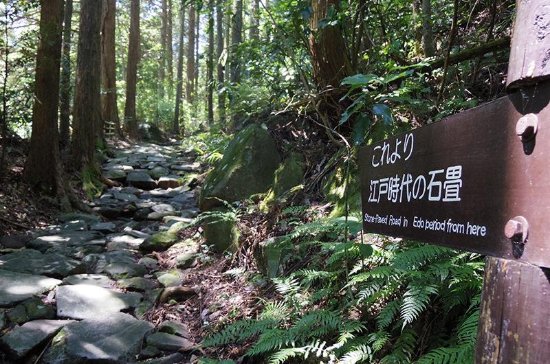 【山岳ライターがおすすめ】箱根旧街道で楽しむ低山ハイキング